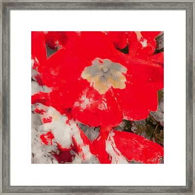 Red Lacquered Primroses Framed Print