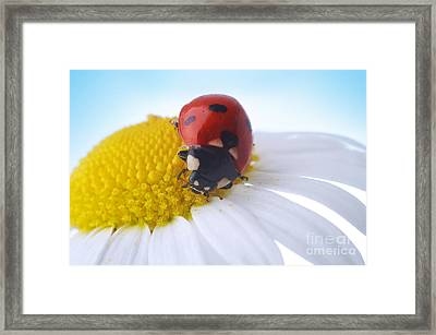 Red Ladybug Framed Print by Boon Mee