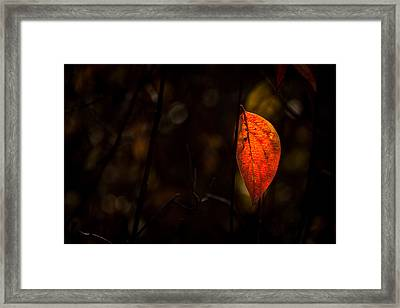 Red Leaf 2 Framed Print by Jay Stockhaus