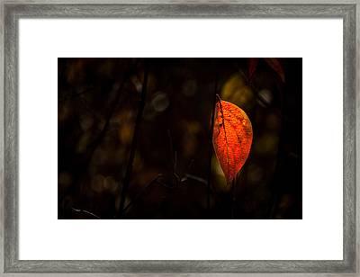 Red Leaf 2 Framed Print