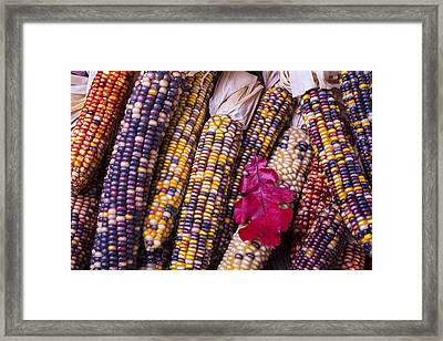 Red Leaf And Indian Corn Framed Print by Garry Gay