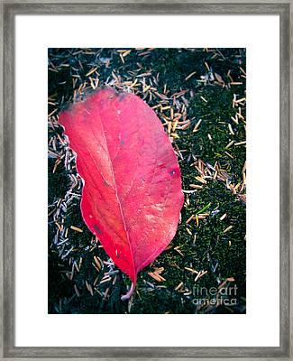 Red Leaf Framed Print by Colleen Kammerer