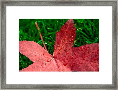 Framed Print featuring the photograph Red Leaf by Crystal Hoeveler