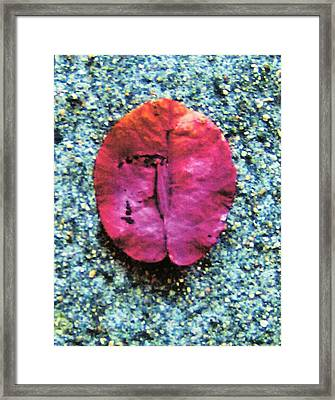Red Leaf Framed Print by Dan Twyman