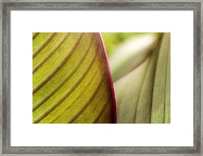 Red Leaf Edge Framed Print by Marina Kojukhova