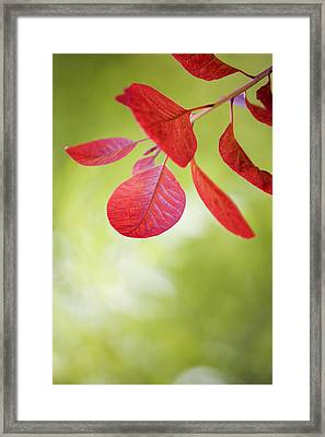 Red Leaf Framed Print