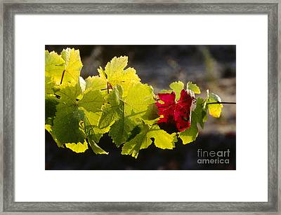 Red Leaf Green Leaf Framed Print by Craig Lovell