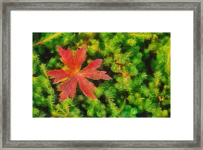 Red Leaf On Green Moss Framed Print by Dan Sproul