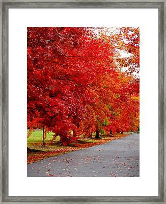 Red Leaf Road Framed Print