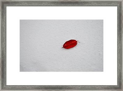 Red Leaf Snow Framed Print