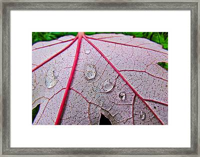 Red Leaf With Raindrops Framed Print
