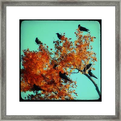 Red Leaves Among The Ravens Framed Print