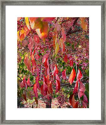 Red Leaves And Berries Framed Print