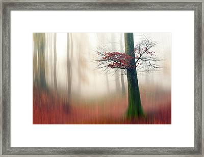 Red Leaves And The Hidden Path. Framed Print