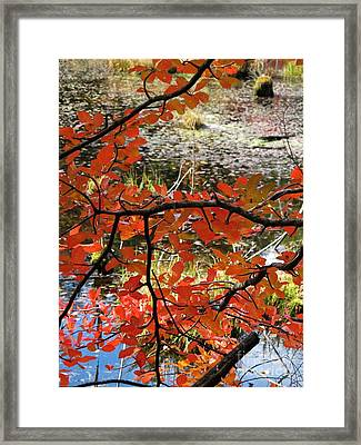 Red Leaves By The Pond Framed Print by Linda Marcille