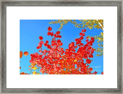 Framed Print featuring the photograph Red Leaves by David Lawson