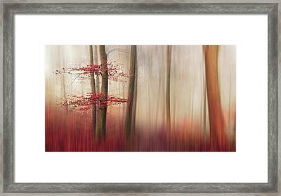 Red Leaves. Framed Print