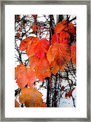 Red Leaves Of Fall Framed Print