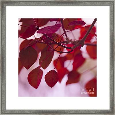 Red Leaves Framed Print by Sharon Mau