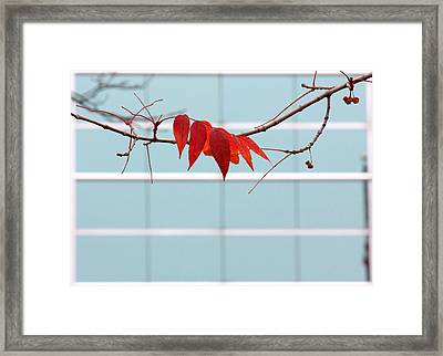 Framed Print featuring the photograph Red Leaves by Viviana  Nadowski
