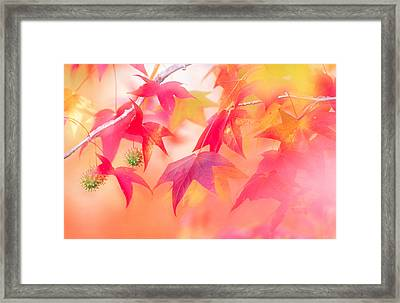 Red Leaves With Backlit, Autumn Framed Print