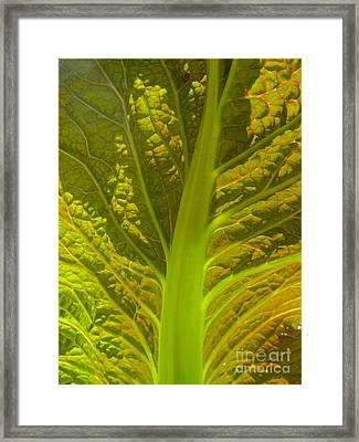 Red Lettuce Veins Framed Print