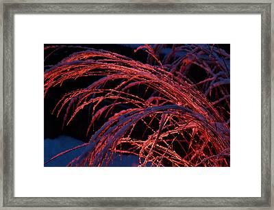 Red Light In Snow-heavy Grass Framed Print by Mick Anderson