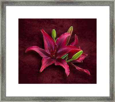 Red Lilies Framed Print by Jane McIlroy
