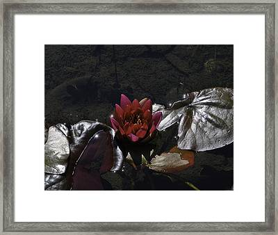 Red Lily On Silver Throne Framed Print