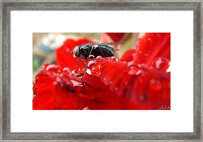 Red Framed Print by Lina Jordaan