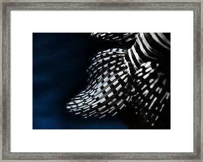 Red Lionfish Fins Framed Print by Marianna Mills