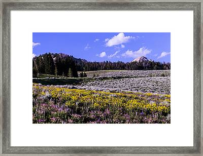 Red Lodge Spring Framed Print by Rebecca Adams