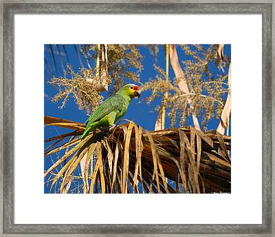 Red-lored Amazon In Palm Framed Print