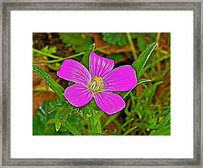 Red Maid In Park Sierra Near Coarsegold-california   Framed Print