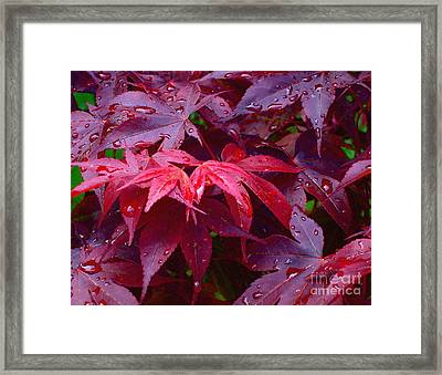 Framed Print featuring the photograph Red Maple After Rain by Ann Horn