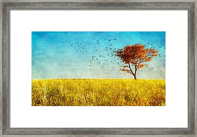 Red Maple Framed Print by Bob Orsillo