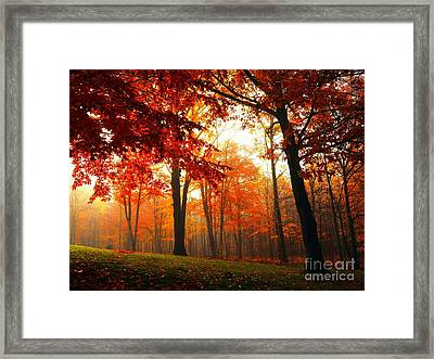 Red Maple Forest Framed Print by Terri Gostola