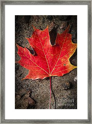 Red Maple Leaf In Water Framed Print by Elena Elisseeva
