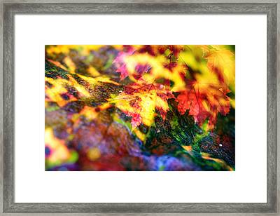 Red Maple Leafs Framed Print