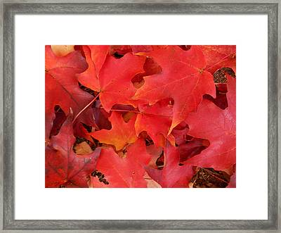Red Maple Leaves Carpeting The Ground Framed Print