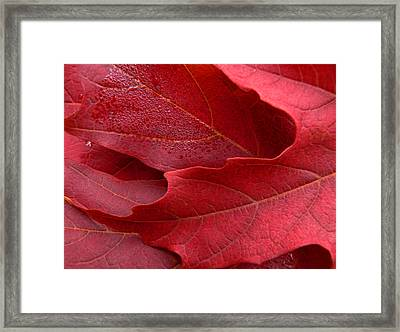 Red Maple Leaves Framed Print by Jennie Marie Schell