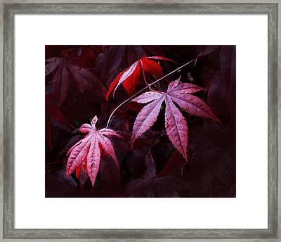 Red Maple Trio Framed Print