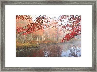 Red Maple Wetland Fall Foliage Framed Print by John Burk