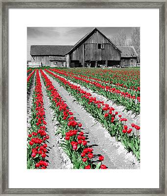 Framed Print featuring the photograph Red by Matthew Ahola