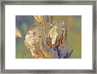 Red Milkweed Beetles Framed Print by Constantine Gregory