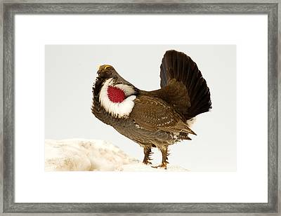 Framed Print featuring the photograph Red Neck Courting by Aaron Whittemore