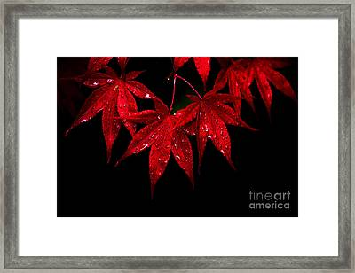 Red On Black Framed Print