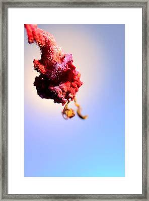 Red On Blue Framed Print by Jonathon Sitton