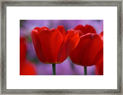 Red On Pink Framed Print by Juergen Roth