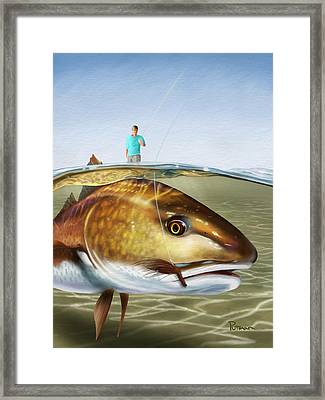 Red On The Fly Framed Print by Kevin Putman